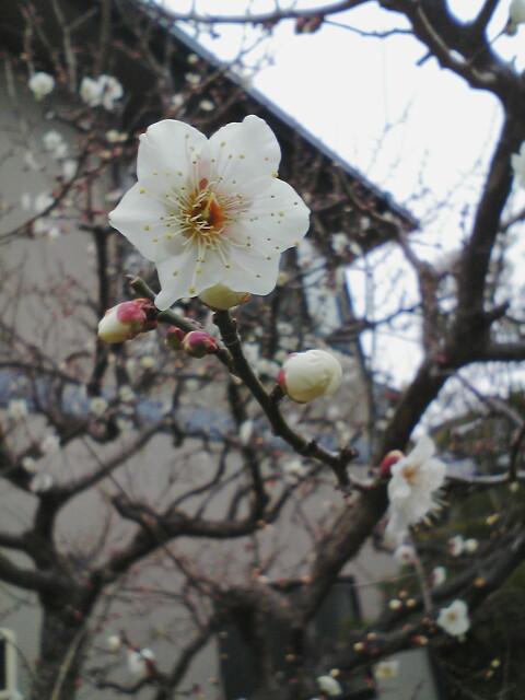 春を待つ(1/15<br />  )